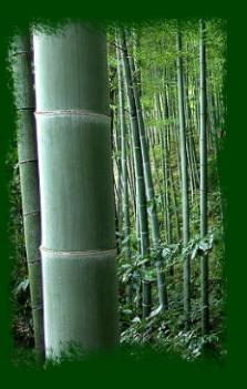 Bambus Gewurz Und Suppenkonzentrat